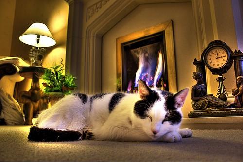 cat comforts - Caza No 7 - flickr