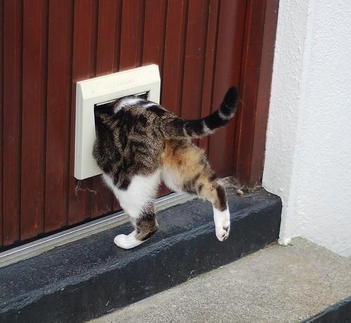 cat flap - stephenhanafin - flickr