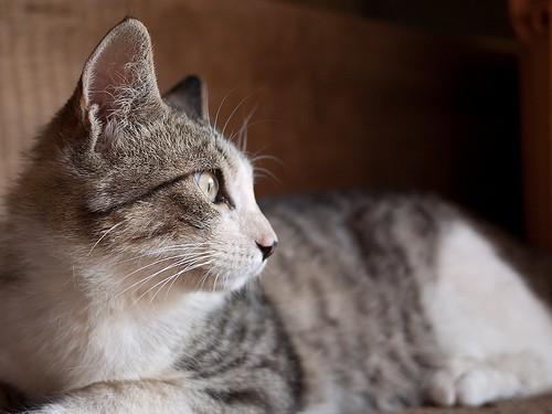 cat views - hkase - flickr