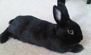 23-Rabbit-Havana