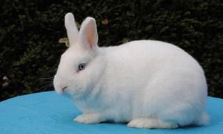 27-Rabbit-Hulstlander
