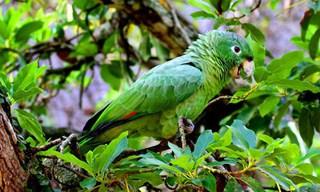 31-Bird-Mealy-Amazon