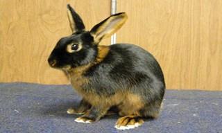 38-Rabbit-Tan-Rabbit