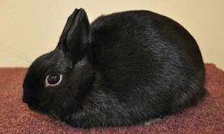 4-Rabbit-Polish-Rabbit