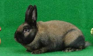 40-Rabbit-Thuringer