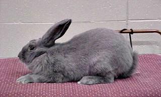 8-Rabbit-Beveren