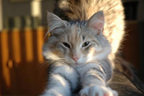 cat stretch - Froskeland - flickr