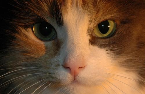 cats eyes - Froskeland - flickr
