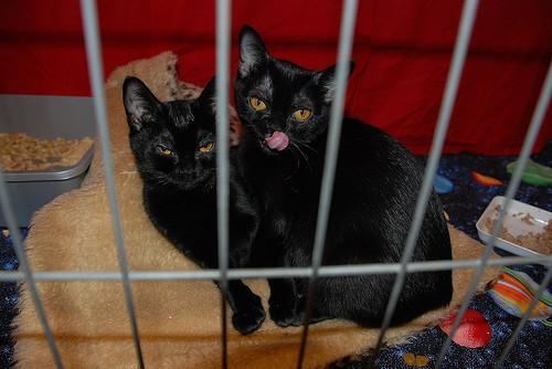 cosy kitties - Mr Wonderful - flickr