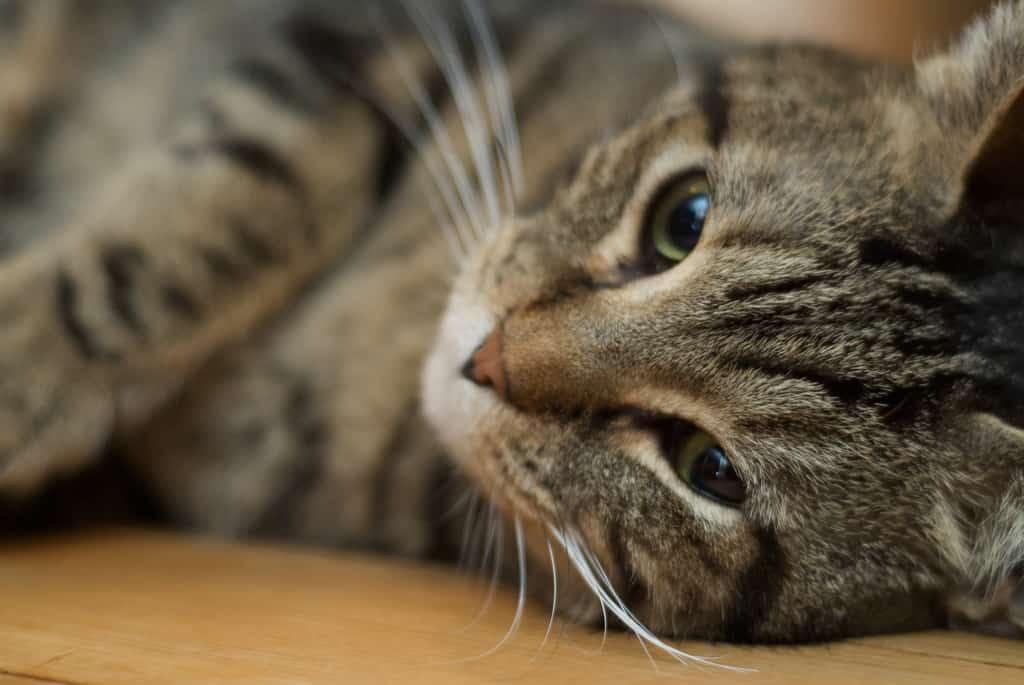 cat - pmarkham - Flickr