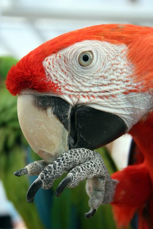 macaw - PuppiesAreProzac - flickr
