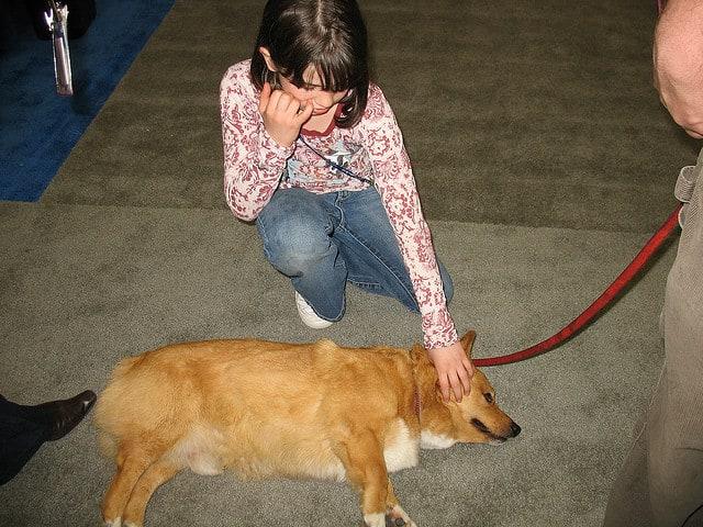 petting dog - nikoretro - Flickr