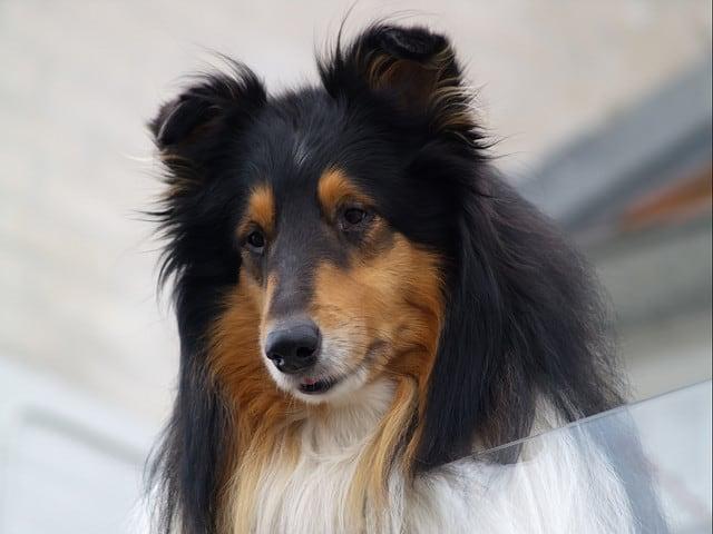 dog - Martin L-Flickr