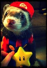 ferret wearing a hat etc - Pets Adviser - flickr.jpg