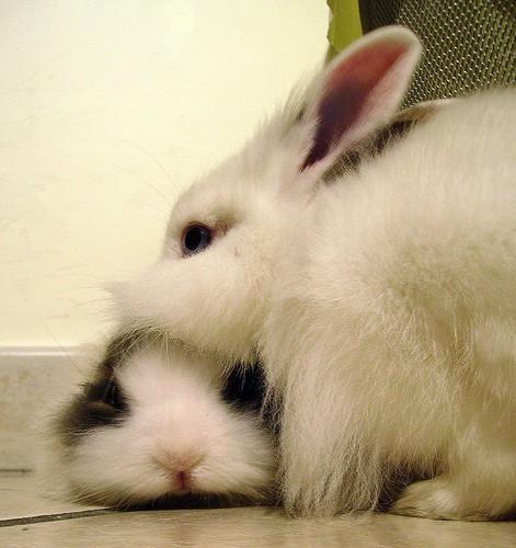 rabbits - sara - flickr
