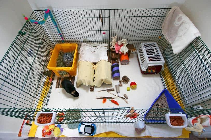 rabbit-playpen-Mark-Philpott-Flickr