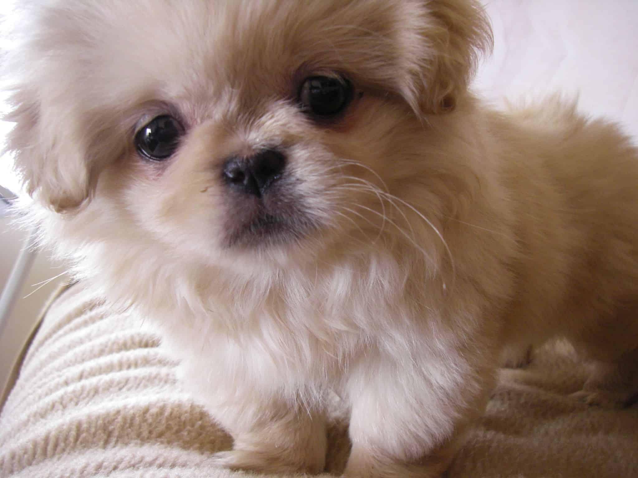 dog-flea-prevention-4