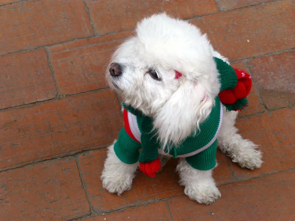 Christmas-pet-1