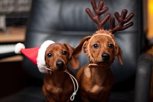 Christmas-pet-3