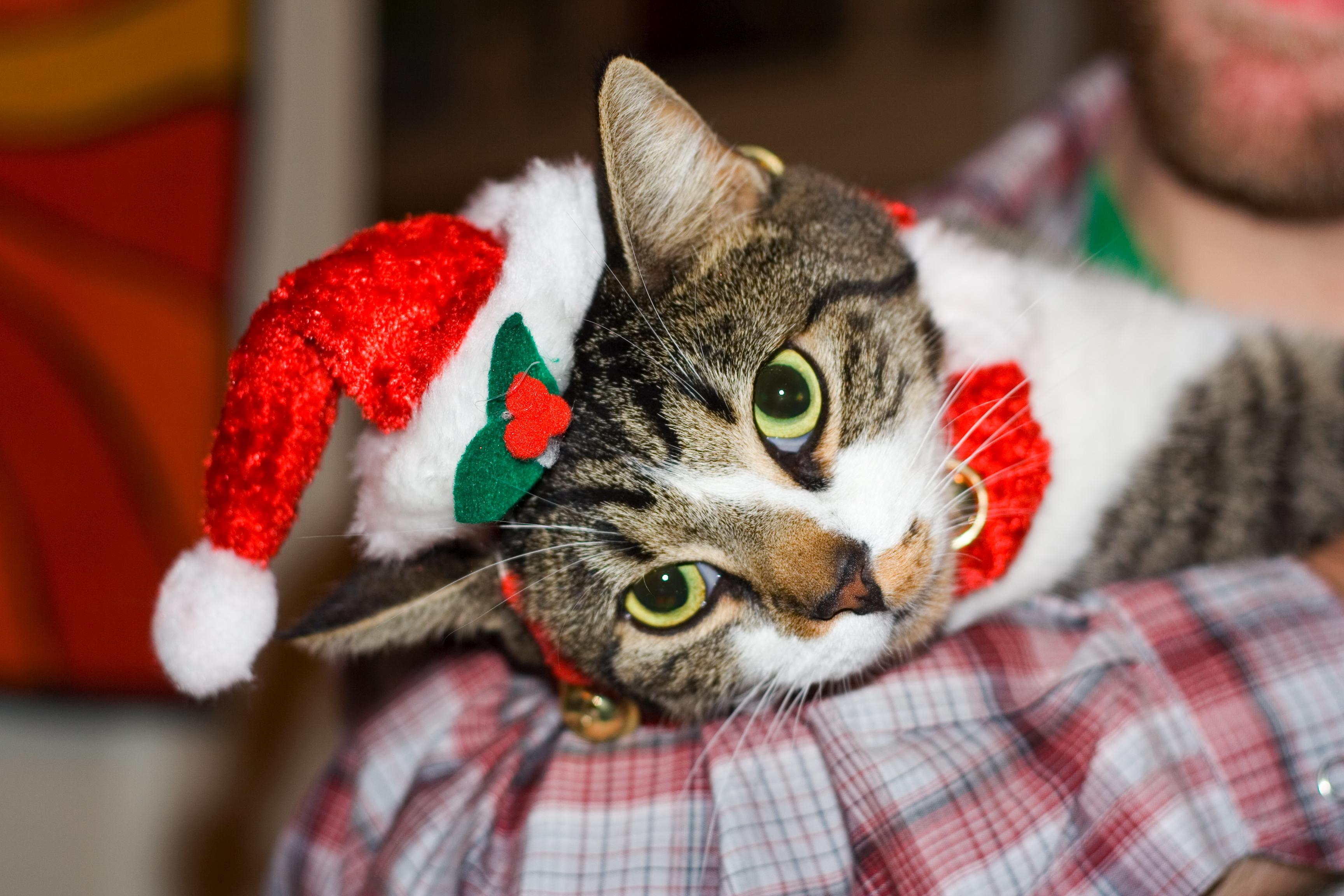 Christmas-pet-6