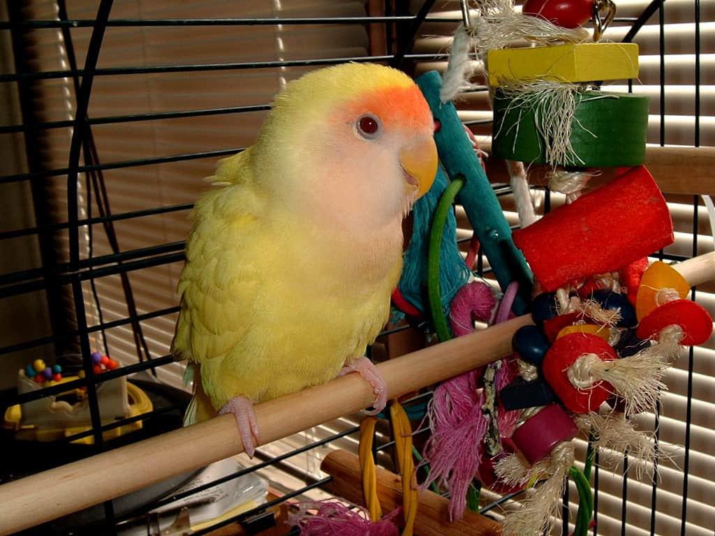 bird-cage-accessories-1