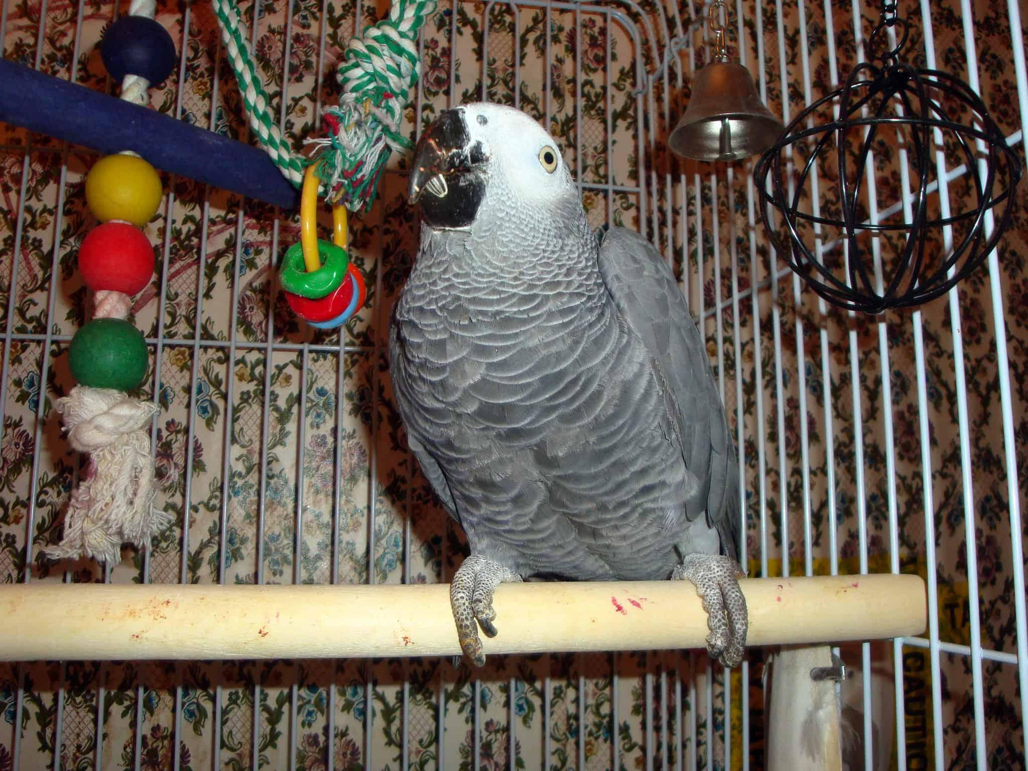 bird-cage-accessories-5