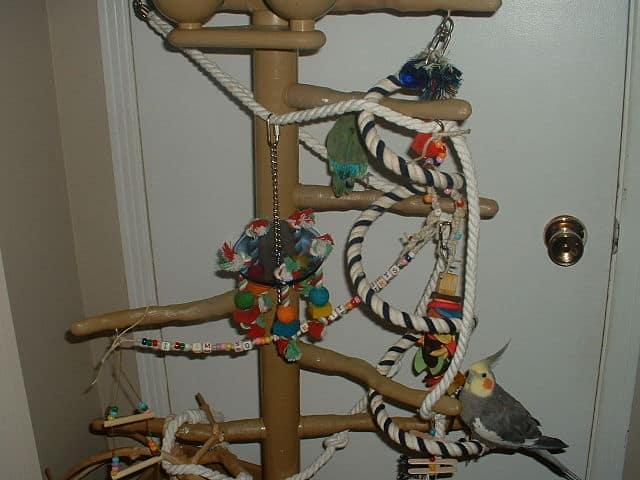 bird-cage-accessories-6
