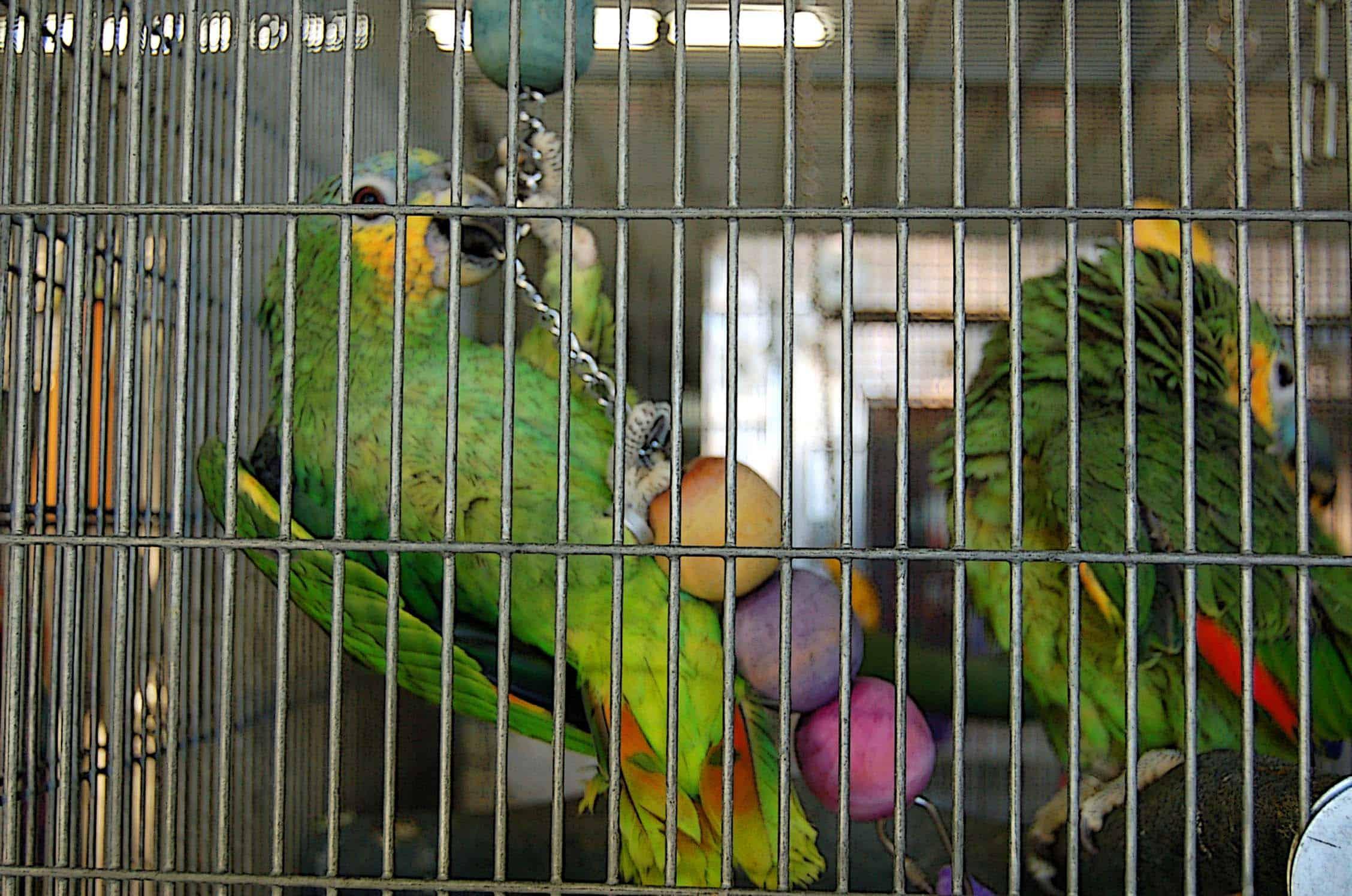 bird-cage-accessories-7