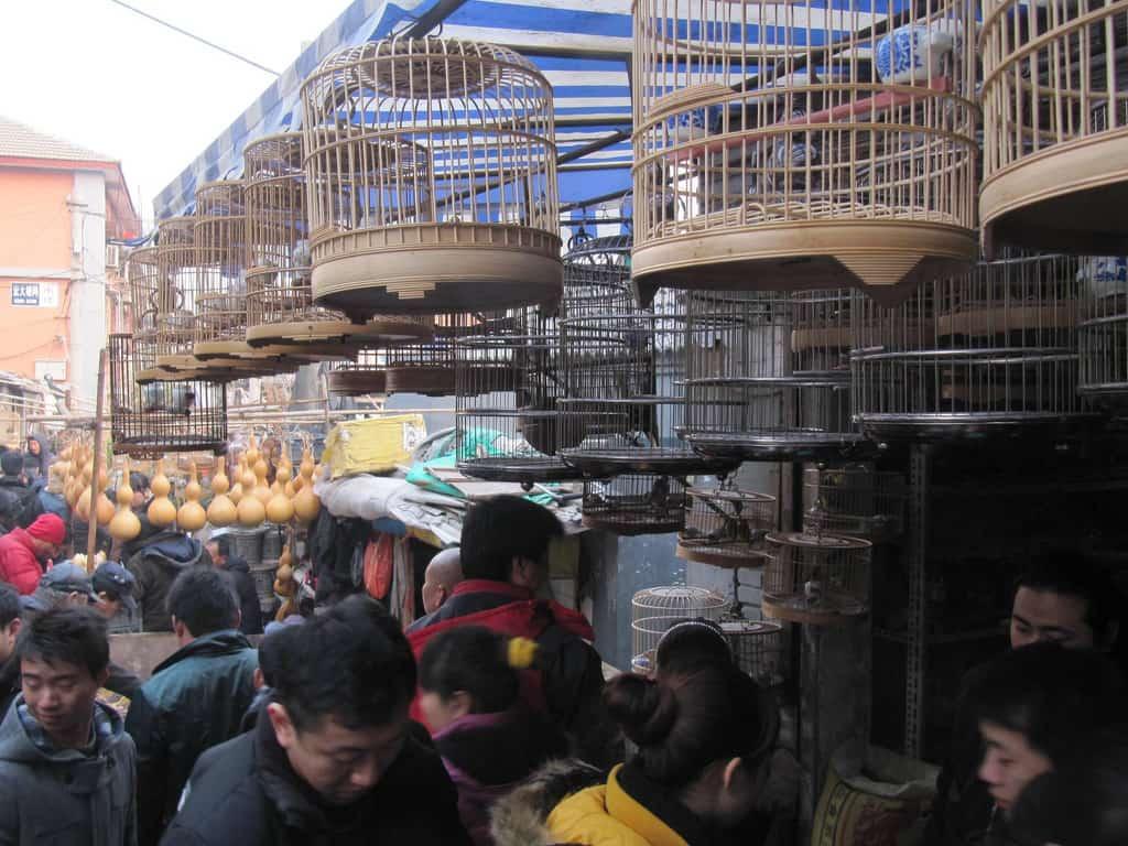bird-cages-5