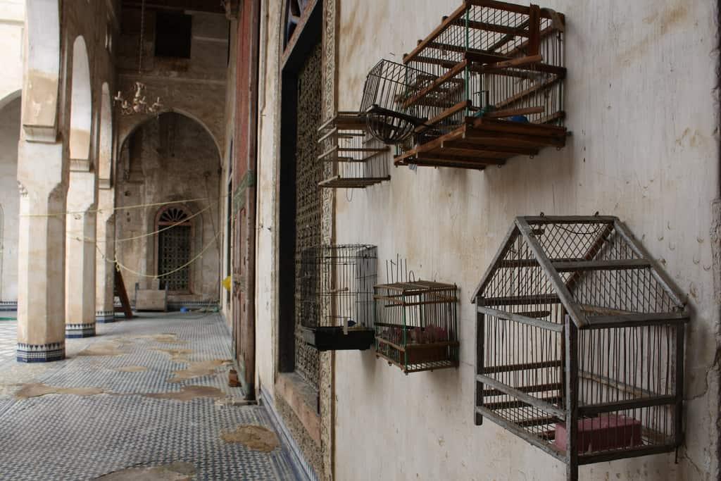 bird-cages-7