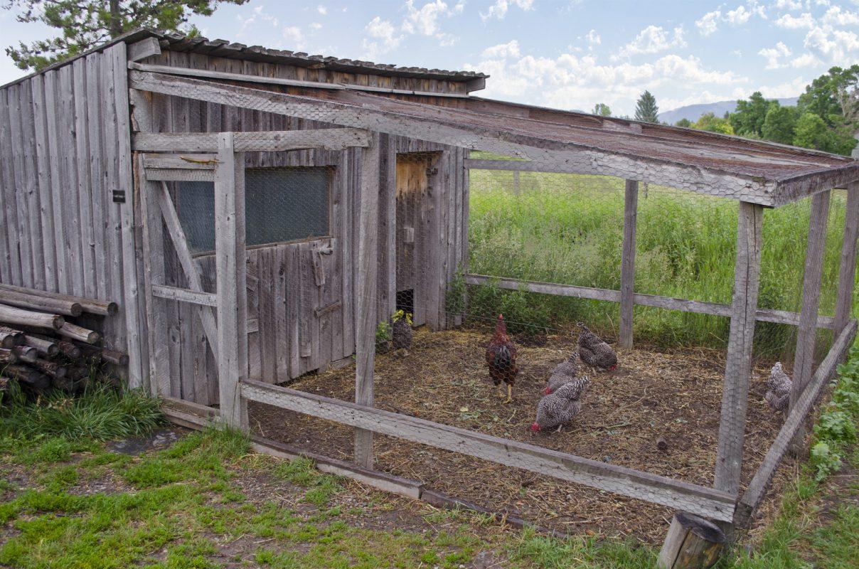 chicken coop parts-1