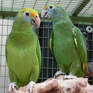bird breeds - 7