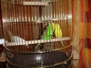 bird cage choosing guide - 2