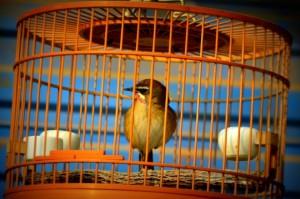 bird cage choosing guide - 3