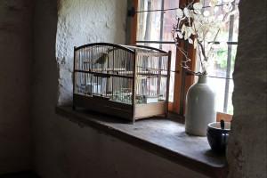 bird cage choosing guide - 4
