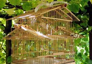 bird cage choosing guide - 5