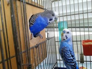 bird cage choosing guide - 6