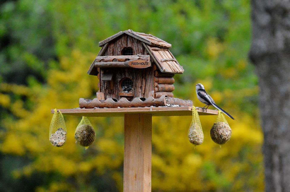 bird cage lining - 1