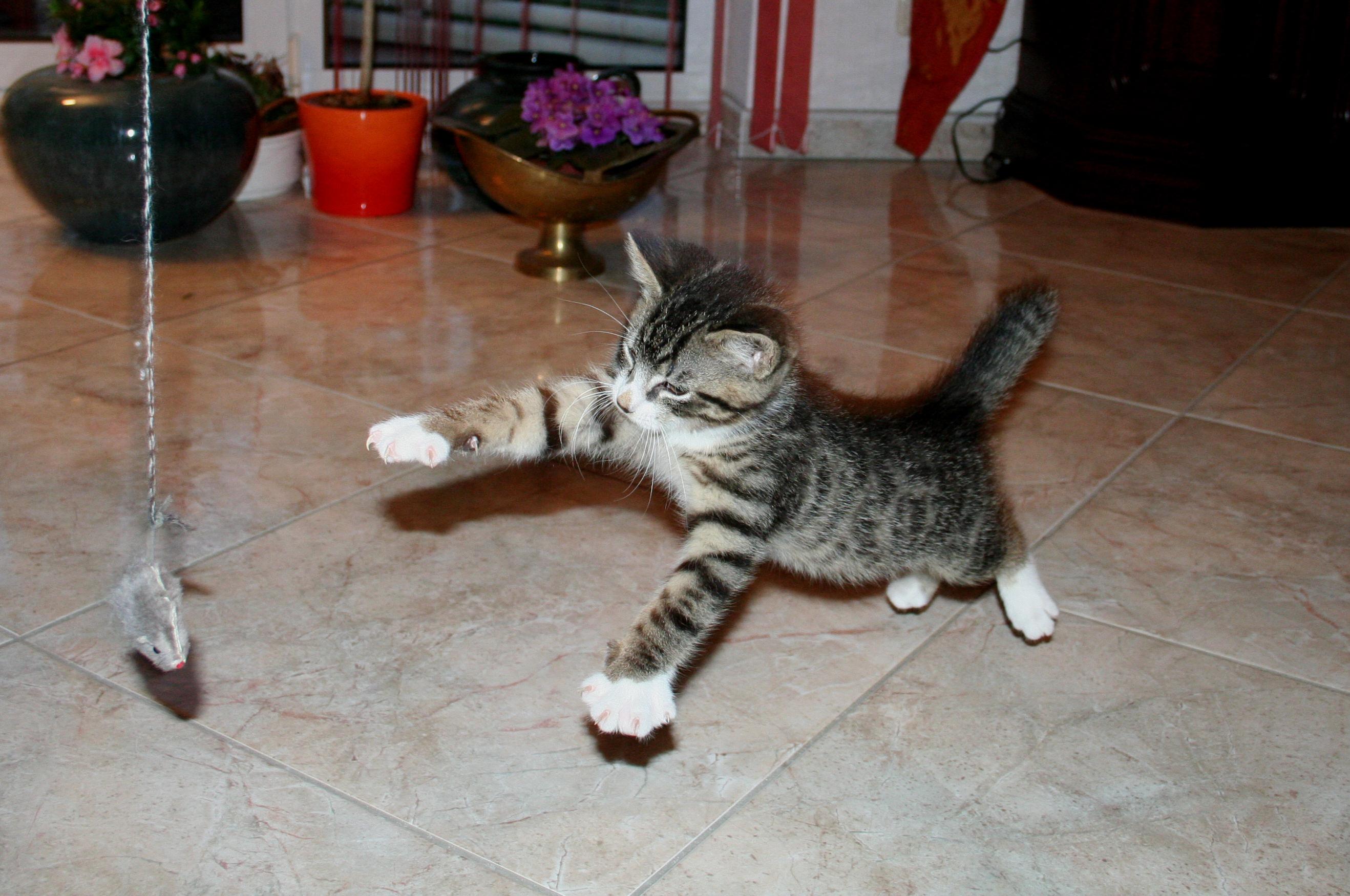 cat scratching post - 2