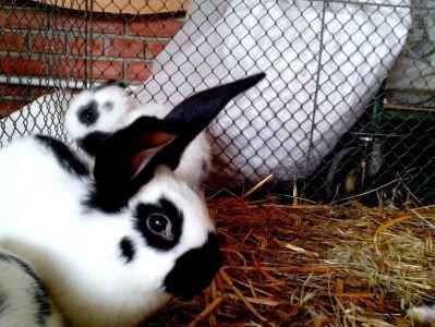 choosing_a_rabbit_hutch_-_1