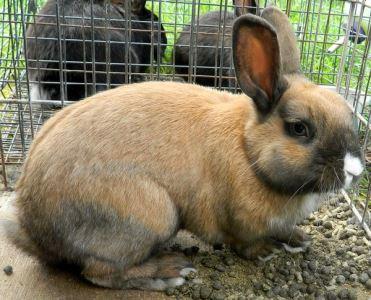 choosing_a_rabbit_hutch_-_2