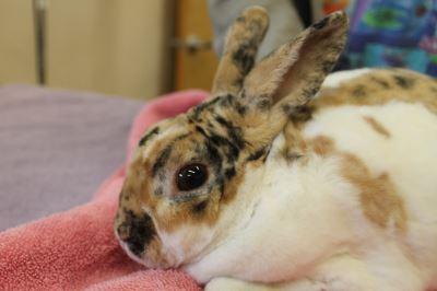 choosing_a_rabbit_hutch_-_4