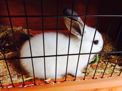 choosing_a_rabbit_hutch_-_5