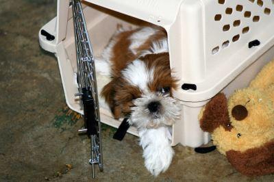 dog_cage_-_3