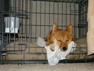 dog_cage_-_4