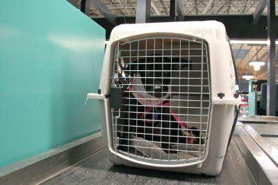 dog_cage_-_5