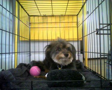 dog_cage_-_6
