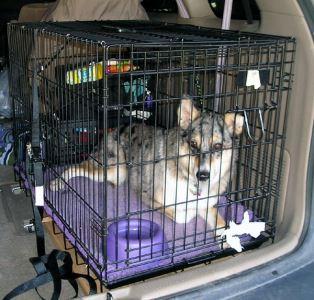 dog_cage_-_7