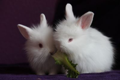 raising_and_caring_for_rabbits_-_1