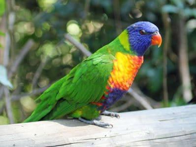 birds_of_Australia_-_2